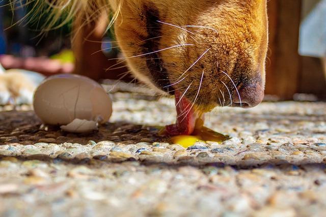 dog licks carpet
